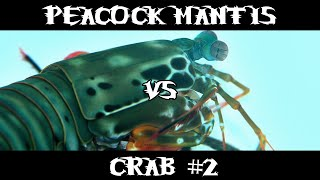 Peacock Mantis Shrimp VS Crab #2