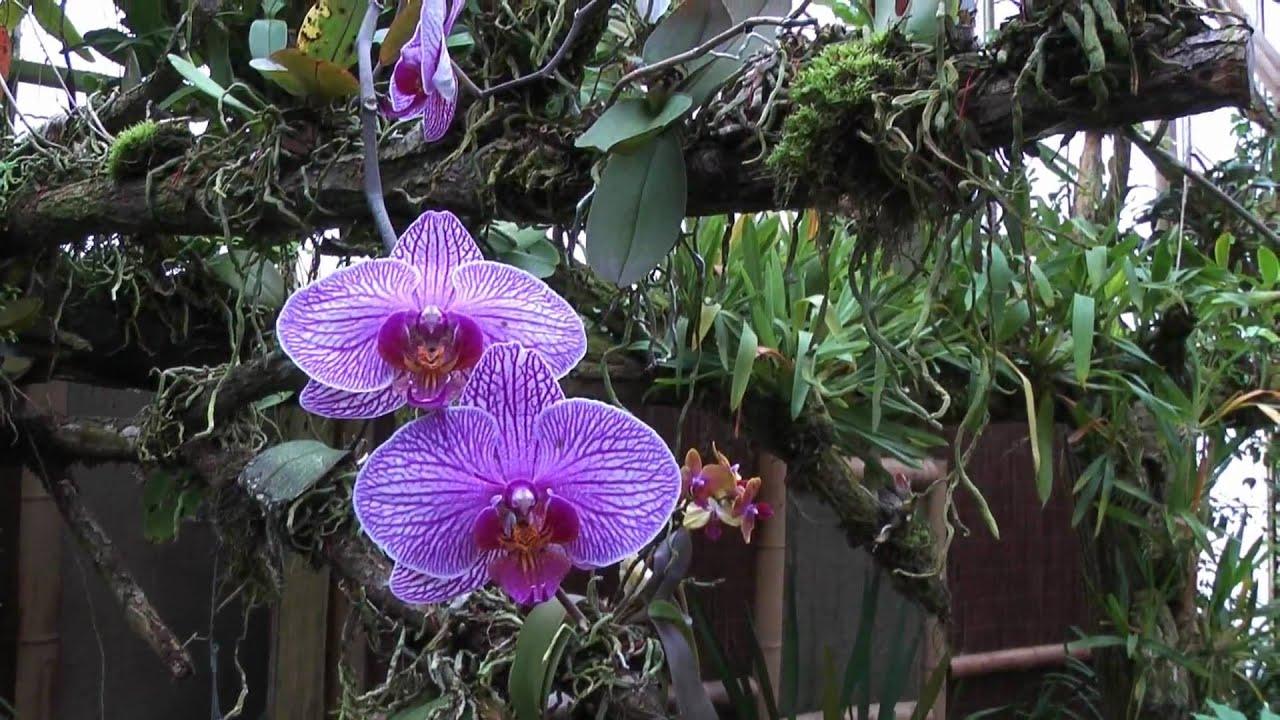 Orchideeën Hoeve Deel 1 1080p