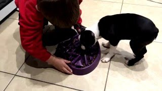 New innovative  slow feed bowl for puppies and cats