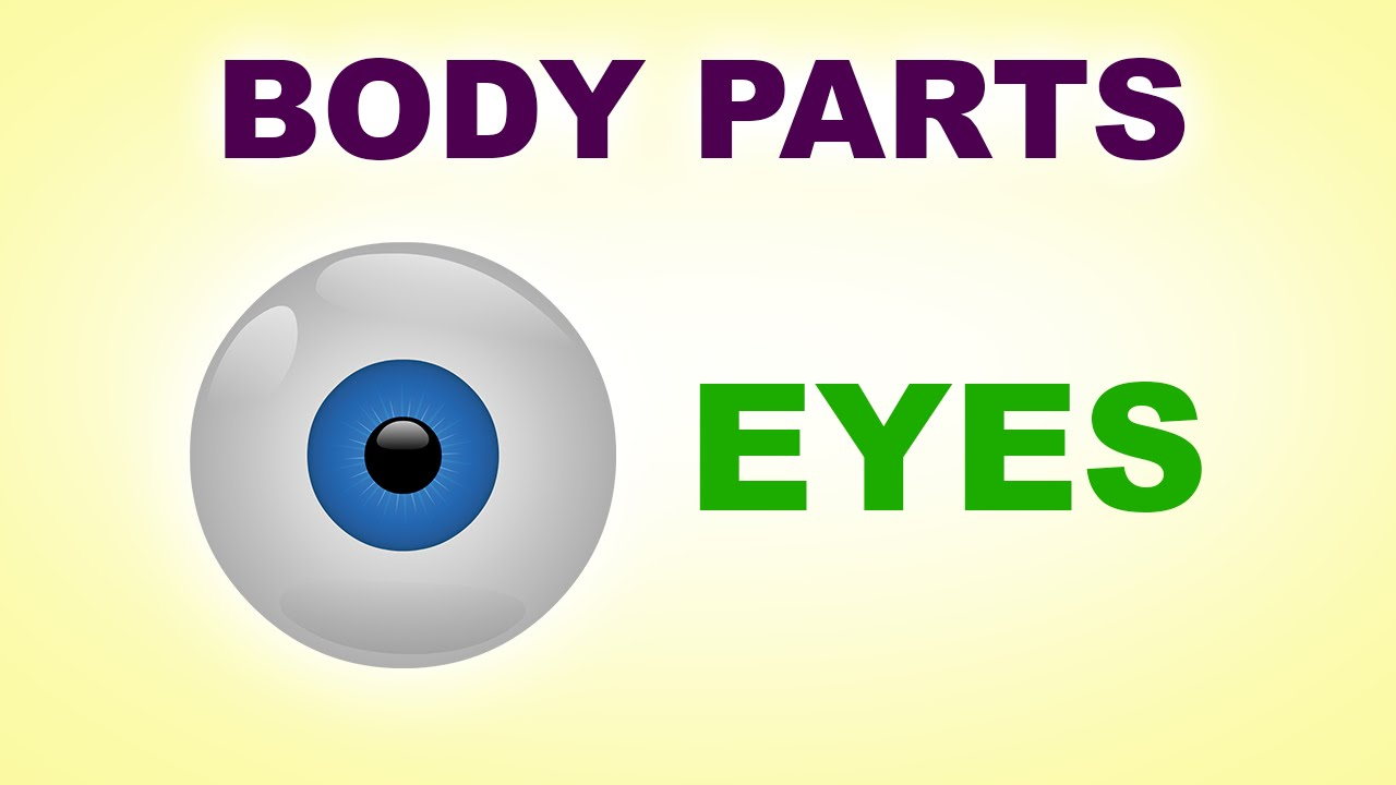 Eyes Human Body Parts Pre School Know Your Body Animated