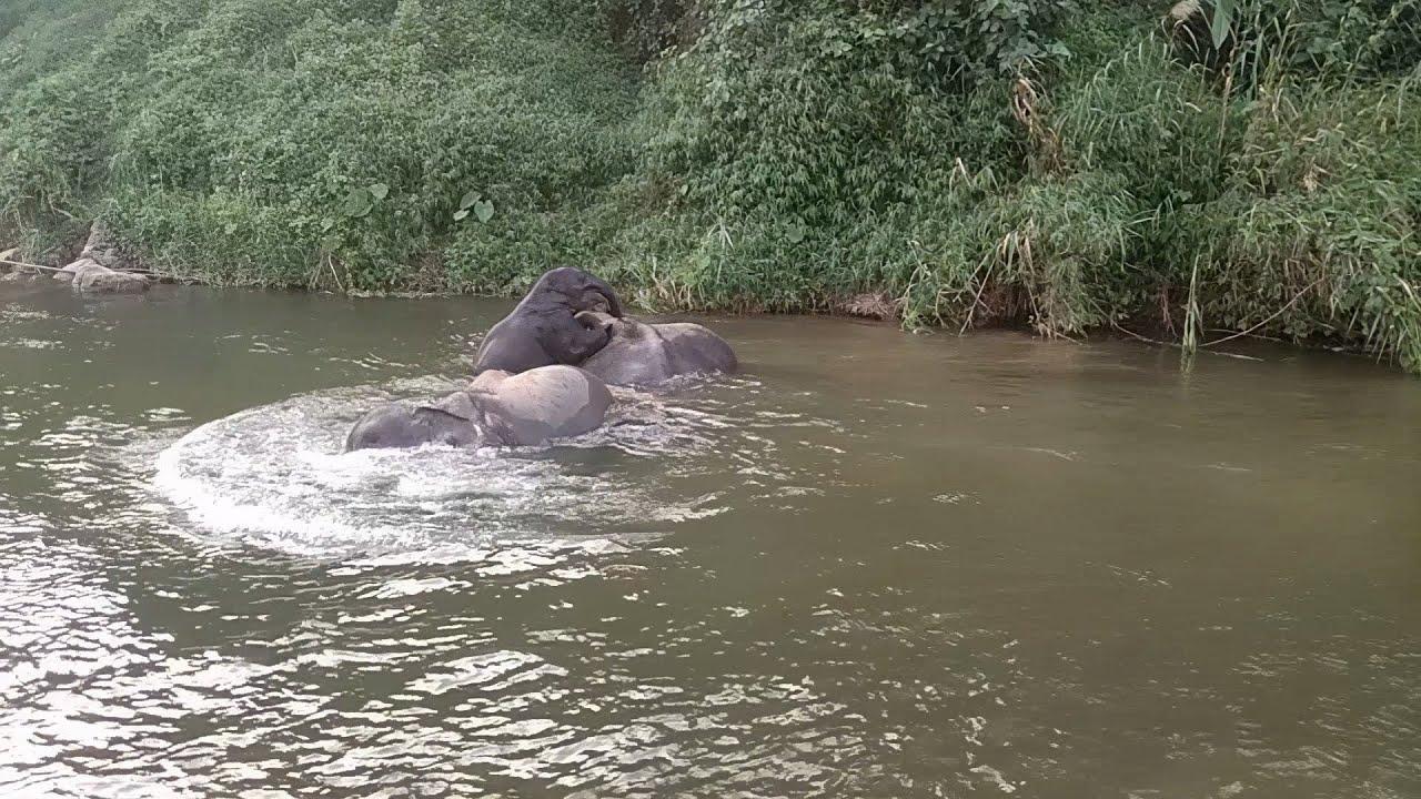 เพลงช้าง ช้าง ช้างอาบน้ำ  ช้างน้อยกอหญ้า  เพลงเด็กน้องภูมิ By KidsMeSong