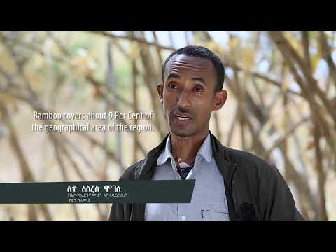 Ethiopia and Bamboo: Africa's Natural Resource and Industry of the Future?