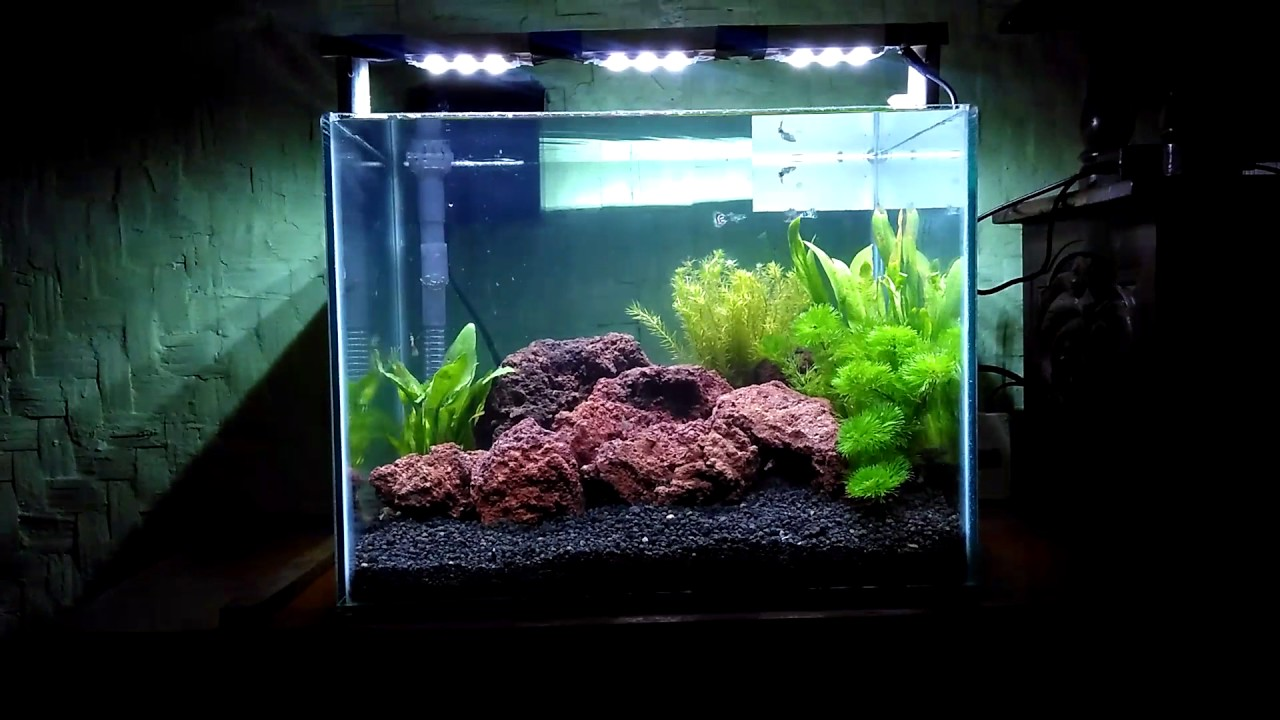 Aquascape Pemula Indonesia Youtube