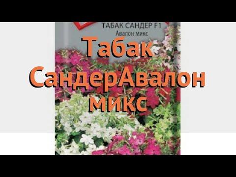 Вопрос: Садовый табак Сандера, какие характеристики?