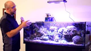 Meet the advanced and easy-to-use Euroquatics Angel LED Aquarium Lights