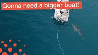 GREAT WHITE SHARK BITES BOAT