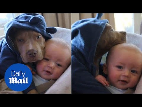 Baby cuddles with American Bulldog pal wearing pyjamas - Daily Mail