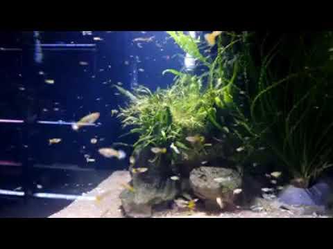 Aquarium Shop Petshop Fish