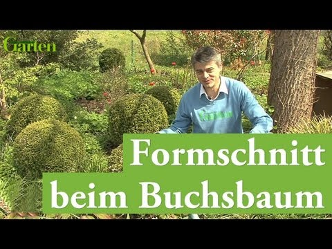 gartentipp formschnitt beim buchsbaum youtube. Black Bedroom Furniture Sets. Home Design Ideas