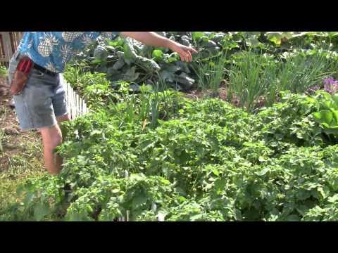 Michael Pilarski's Cape Gooseberry - Nutraceutical Adaptogen Superfood