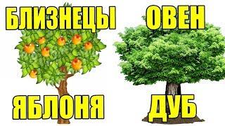 Download КАКОЕ ТЫ ДЕРЕВО ПО ЗНАКУ ЗОДИАКА Mp3 and Videos