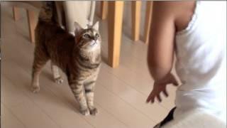 子供とめちゃくちゃ楽しそうに遊ぶ猫 thumbnail