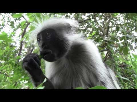 Trip to Jozani Forest, Zanzibar