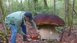 сырой белый гриб - это очень вкусно! www.grib.tv