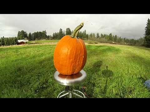Airbag Meets Pumpkin
