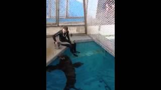 Методы воспитания морских животных в дельфинарии