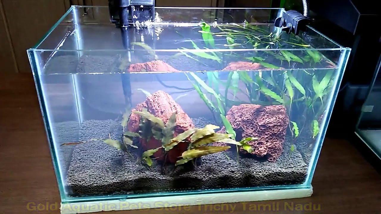 Aquarium Plants for 50 Rupees # live Aquarium plants for sale in golden  aquatic trichy