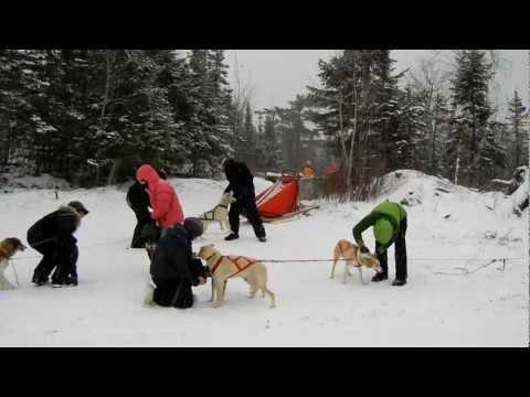 OKPIK Dog Sleds 1