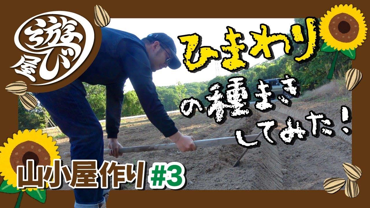 【山づくり #14】ひまわりの種を大量にまいたけど予想以上にヤーレヤレ!小屋作り#3