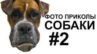 ПОДБОРКА СМЕШНЫХ СОБАК, Фото приколы