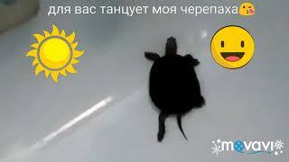 Черепаха танцует прикол))