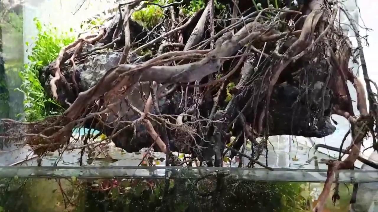 Bonsai Aquarium – Bể bonsai đẹp để nuôi cá cảnh