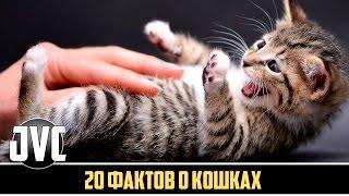 20 ФАКТОВ О КОШКАХ