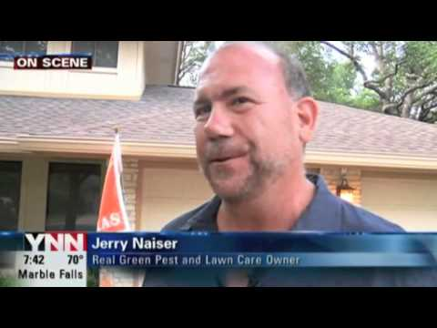 News 8 - Tips on Lawn Care