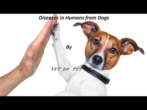 Diseases in Humans from Dogs|| Rabies in depth||VET for PET|| Explained|| Hindi