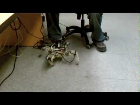 Evolving Gaits for Physical Robots Directly in Hardware with the HyperNEAT Generative Encoding
