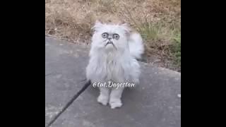 Мужик ругается с котом, который ухаживает за его кошкой )