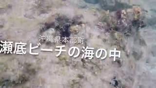 沖縄県本部町にある瀬底島の瀬底ビーチは唯一シュノーケルが楽しめるビ...