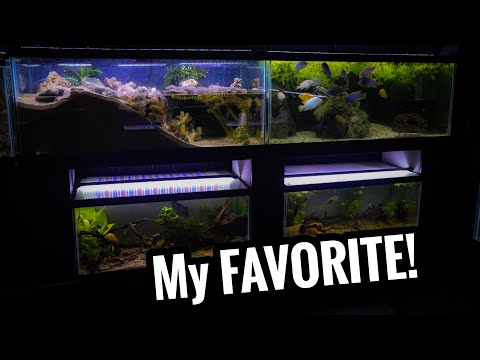 Why I Think These Are The BEST AQUARIUM SIZES