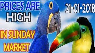 WEEKLY REPORT OF SUNDAY BIRDS MARKET SHALIMAR GARDEN LAHORE | URDU/HINDI