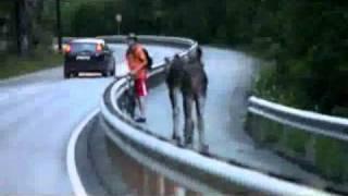 rowerzysta i dzikie zwierzeta