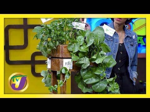 Urban Garden | TVJ Smile Jamaica