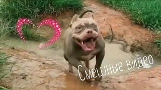 Подборка смешных видео с животными и людьми