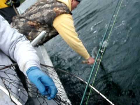 Alaska Salmon Fishing, A Spring King Bonanza, Kingfisher Lodge, Craig Alaska
