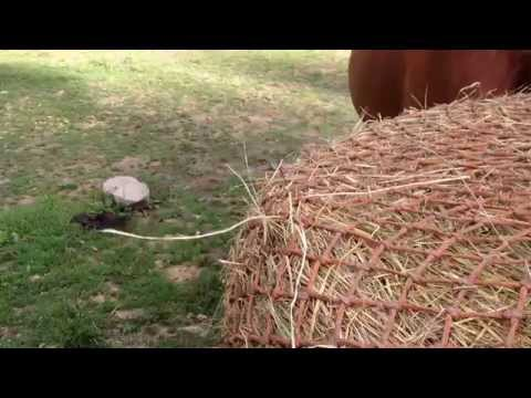 Our Horses Using A Round Bale Slow Feeder Net