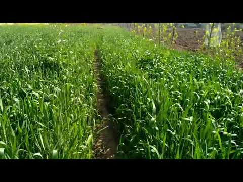 Indian agriculture small farmers good income for faimly