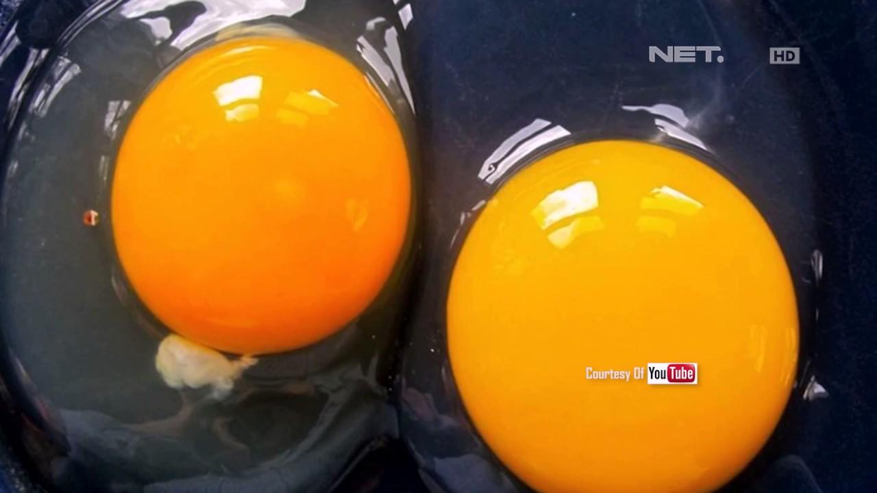 Perbezaan Antara Telur Itik Dan Ayam 2020 Gaya Hidup