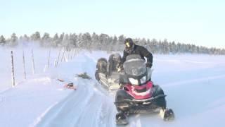 トナカイ飼育の仕事とは?探検家たちが、フィンランド最古の職業の一つ...