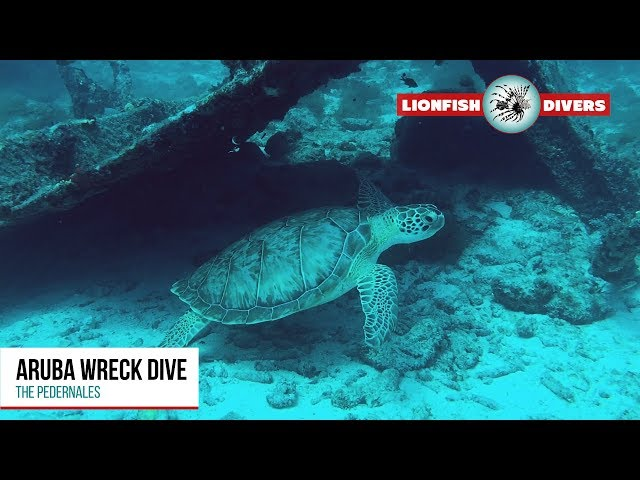 Aruba Wreck Dive - The Pedernales