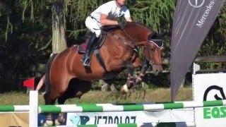 2007, 1m50 GP horse, amazing scope and temperament