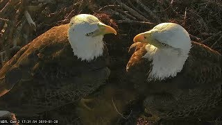 First 4K Bald Eagle Cam to Stream! NEFL Eagle Cam. WE GOT AN EGG!