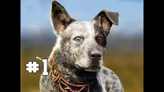 Far Cry 5 Gameplay Walkthrough Part 1 - BOOMER (Hands on Impressions)
