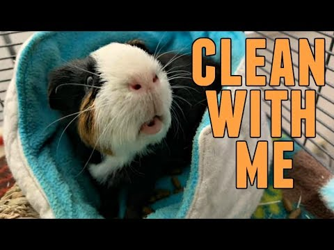 Clean With Me! || Guinea Pig Critter Nation