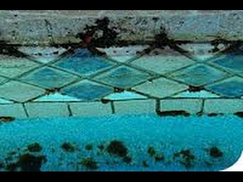 How to easily test for swimming pool black algae youtube for Black spots in the swimming pool