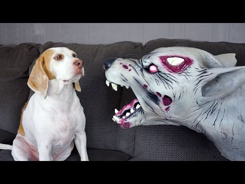 Zombie Dog vs. Cute Dog Maymo
