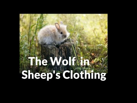 Dungeons And Dragons Lore Wolf In Sheeps Clothing Youtube